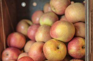 applesauce apples recipe